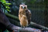 solitary owl perched on tree branch