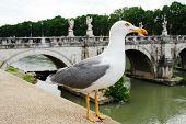 Gull On Board Oftiber River In Rome City