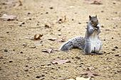 Cute Squirrel Eating A Nut.