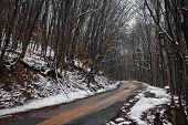 Turning the winter road in the woods