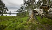 Scottish Landscape With Lake And Broken Trunk