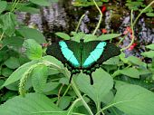 Butterfly in Sioux Falls South Dakota