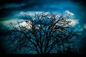 silhouette of a leafless tree at dusk