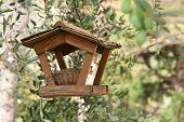 bird nest and feeder
