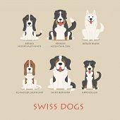 stock photo of swiss shepherd dog  - Set of swiss dogs eps10 vector format - JPG