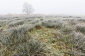 Winter Landscape Of Grassland On Misty Morning