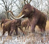 Постер, плакат: Woolly Mammoth Family In Forest