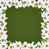 Spring flowers frame, white narcissuses and green grass
