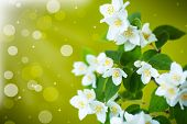 Branch Of Jasmine Bokeh Background