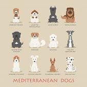 Set Of Mediterranean Dogs