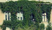Green Facade House