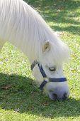 White Pony 014
