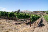 Vineyards Of California
