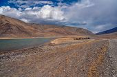picture of yaks  - Herd of yaks by the river in Pamir mountains in Tajikistan