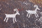 Grapvine Canyon Petroglyphs