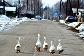 foto of greater  - Home animals play greater role in lifes of the person - JPG