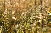 Blur Summer  Morning Dewy Grass Background