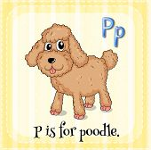 pic of poodle  - Flashcard letter P is for poodle - JPG
