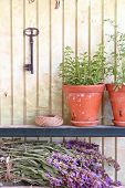 picture of origanum majorana  - Bunch of sage and pot with herbs in front of an old wall - JPG