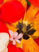 image of stamen  - yellow pistil and stamens red tulip black and white daffodils in the spring bright bouquet vertically - JPG
