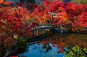 picture of foliage  - Autumn foliage at the stone bridge in Eikando Temple Kyoto Japan - JPG