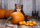 image of gourds  - Adorable toddler surrounded by giant pumpkins - JPG