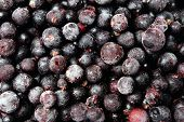 picture of blackberries  - Blackberry in bowl close up - JPG