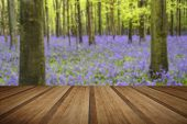 stock photo of harebell  - Beautiful carpet of bluebell flowers in Spring forest landscape with wooden planks floor - JPG