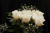 Image Of A Dozen White Roses