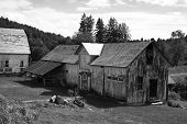 Apple Barn In Black And White