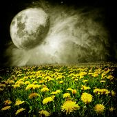 Moon Over Dandelion Field