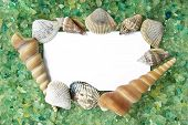 card with seasalt and seashells with a place for your text