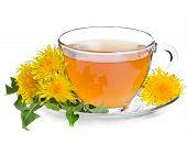 tea dandelion isolated on a white