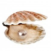 sea shell with pearl on white background