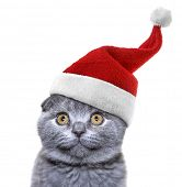 christmas cat in red Santa Claus cap on a white background