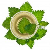 Herbal nettle tea on white background