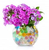 beautiful flowers in vase with hydrogel isolated on white poster