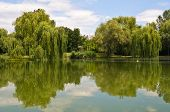 Lake Of Opusztaszer