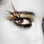 Fashion Eye