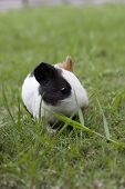 Hamster Black