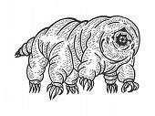 Tardigrade Water Bear Moss Piglet Micro Animal Sketch Engraving Vector Illustration. Tee Shirt Appar poster