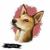 Indian Pariah Dog, Indian Native Dog, Indi-dog Digital Art Illustration Isolated On White Background poster