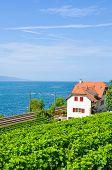 Scenic Railway Leading On The Coast Of Geneva Lake, Lac Leman In Switzerland. Green Vineyard On The  poster