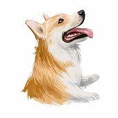 Welsh Corgi, Pembroke Dog Breed Portrait Isolated On White. Digital Art Illustration, Animal Waterco poster