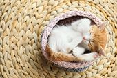 Cute Little Red Kitten Sleeping In Knitted Basket On Wicker Mat, Above View poster