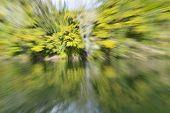 Nature Abstract Zoom Blur On Idyllic Lake Rotoiti Near Rotorua New Zealand. poster