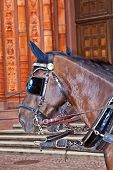 stock photo of stagecoach  - head of standing stagecoach horses in detail - JPG