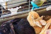 Little Rabbit. Close Up Furry Rabbit Drinking Water From Feeding Water Bottle. The Bunnies Inside Ca poster