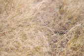 Decay And Sadness. Dead Grass. Brown Grass Background. Dry Plants Or Grass Texture Closeup. Autumn G poster