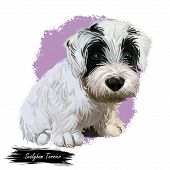 Sealyham Terrier Toy God, Pet Of Small Size Watercolor Portrait Digital Art. Hand Drawn Domestic Ani poster